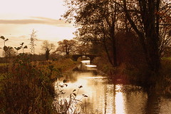 Late Afternoon Sun (freebird4) Tags: uk canal shropshire nikond50 soe afternoonsun specland freebird4 impressedbeauty flickrphotoaward