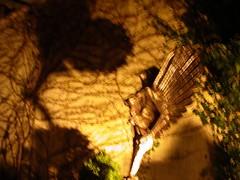 Essen Phoenix by Sahaja at night