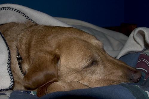 01/06 - A Dog's Life