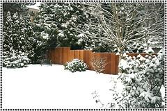 My Backyard 1-16-07 - by KaCey97007