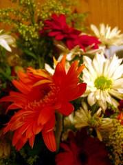 1-18 flowers
