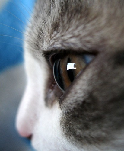 Cat S Eye Photography