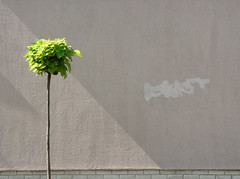 Suburban Minimalism (sonofsteppe) Tags: street shadow urban sunlight inspiration detail tree green art wall creativity grey graffiti daylight triangle mural hungary alone loneliness suburban geometry tag budapest images diagonal explore remove simplicity getty imagination minimalism removal visual simple exploration sunbeam thewall minimalist floodlight frontview fragment ilmuro wallscape sonofsteppe pusztafia urbanlifeoftrees