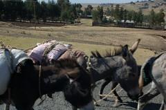 Local Transport (Sean Paul Kelley) Tags: africa shoa ethiopia addisababa dessie debresina debrebirhan kombolcha
