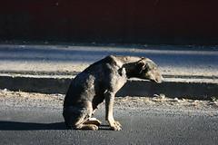 Mirada baja (vonKinder) Tags: mexico perro explore puebla ltytr1 pueblaene07elsaerwin organizacinartsticalagalera