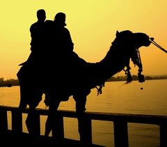 Promenade sur un dromadaire (frisamusic) Tags: india camel rajasthan udaipur kiss2 dromadaire kiss3 kiss1 kiss4 kiss5 superhearts