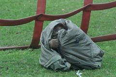 Orang Utan (tim ellis) Tags: animal zoo hidden orangutan ape hiding primate twycrosszoo msh0107 msh01072 mshbest mshbest2 hc02085 hc0208