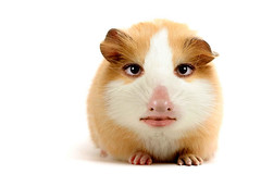 hamster1 (Pretorious Photography) Tags: ladies girls people bw woman hot color colour art colors girl strange beauty animals hippies lady photoshop altered bug photography weird blackwhite eyes women funny paint colours searchthebest zombie photoshopped alien hippy super bugs aliens wv westvirginia ladys hippie chicks zombies coolest beautifil royalty casualties photochopped hippys supershot abigfave pretorious anawesomeshot impressedbeauty flickrdiamond chercherlafemme ysplix photoshoproyalty