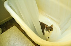 rub a dub dub, one cat in the tub - by Bird in the Hand