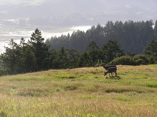 oakland bambis