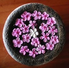 Spa flores