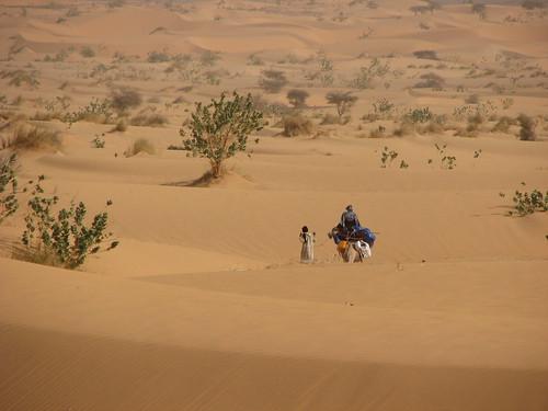 نبذة عن الجزائر