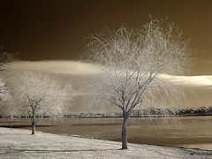 the trees (zachstern) Tags: trees wallpaper sky tree clouds landscape ir arbol washingtondc tr boom rbol infrared   albero tre puu arbre rvore potomacriver strom baum trd  infravermelho    r72 copac infrarot   drzewo   stablo infrarrojos   infrapuna infrarood infrarouge  outstandingshots infrarossi   anawesomeshot f717ir  inframerah      infravrs  infraerven