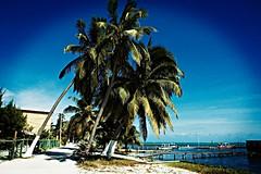 Palms - lomo