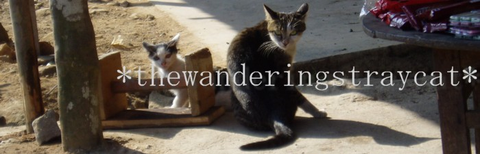 thewanderingstraycat