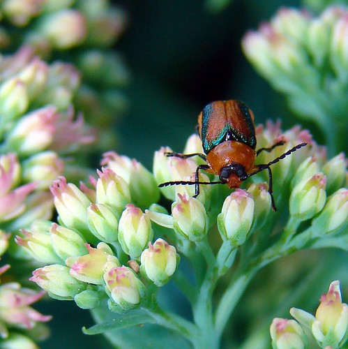 Bugs Are Eating the Leaves of My Sage Plants | Hunker