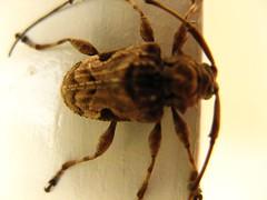 Insect (belmax) Tags: panama santacatalina