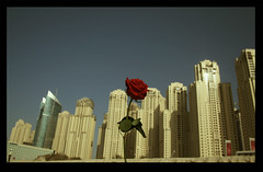 ..    ( Emiraty ) Tags: red rose dubai uae  jumirah