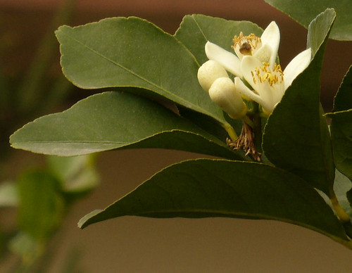 kathryn fiore