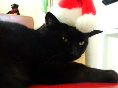Merry Freakin' Christmas (indigo_jones) Tags: lola blackcatschristmas