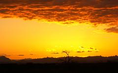 Apache Junction Sunrise Yellows (cobalt123) Tags: red arizona orange mountain mountains yellow clouds sunrise catchycolors skyscape landscape gold golden scenery rocks glow desert minolta zoom bestviewedlarge geology dimage z5 apachetrail desertplants photostroll tontonationalforest highway88 soyellow specsky easternarizona azwtf neartortillaflat orangeset