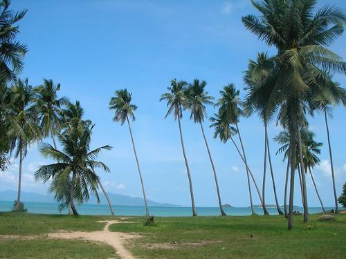 サムイ島-coconuts
