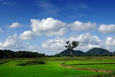 fields of life 03 (Agron) Tags: landscape ricefields trincomalee dailynews nikond2x publishedphoto agrondragaj srilankanbeauty fieldsoflife thampalagama