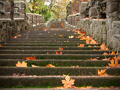 Step into Fall (Gigapic) Tags: city usa oregon unitedstates steps interestingness9 outstandingshots cy2 challengeyouwinner abigfave photofaceoffwinner pfogold pfohiddengem