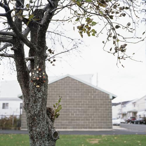 Gum Tree!