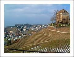 Lines of Vineyards (thnkfst) Tags: castle lines suisse vineyards montreux switzerrland chateauchatelard