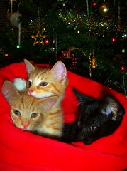 So this is Christmas.....and a happy cat year......