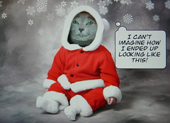 Christmas Megumi... (martian cat) Tags: christmas cards 2000 1600 explore 600 400 200 1900 1200 1800 100 300 500 700 800 1500 1000 900 russianblue 1100 1700 1300 megumi 1400 showcased martiancatinjapan allrightsreserved pet500 pet100 pet1000 pet2000 pet1500 martiancatinjapan martiancatinjapan