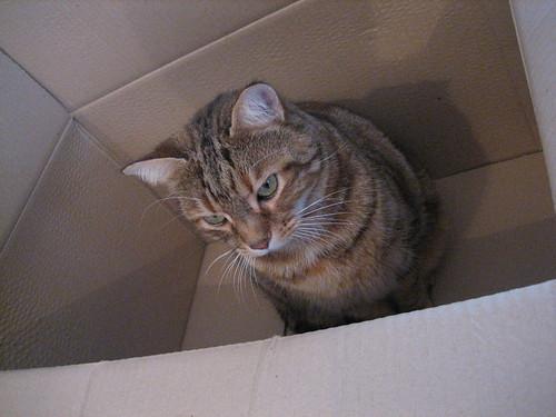 Maya dans le carton