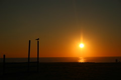 Cape May Sunset (Bradley Fry) Tags: sunset bird beach newjersey canon20d nj capemaypoint capemay