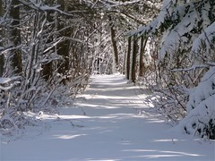 The Shining Path! Le sentier lumineux! (Denis Collette...!!!) Tags: blue trees winter light sunset sun white snow canada reflection tree art nature water reflections river photography soleil photo eau poetry branch photographie quebec photos lumire branches hiver riviere highlights rivire bleu reflet arbres qubec neige blanche snowfall arbre blanc reflets poesie branche posie photographies world100f multimegashot vosplusbellesphotos sensationalphoto visionqualitygroup visionquality100 visionquality1000