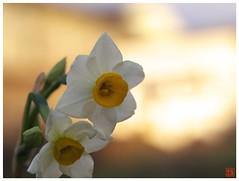 Flower 070108 #04