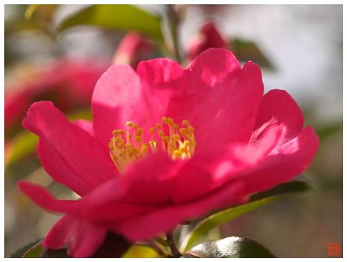 Flower 070111 #02