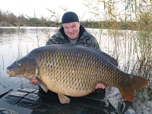 common carp. World record common carp -