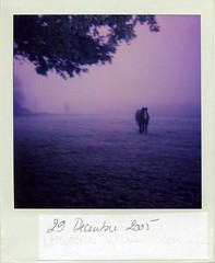 Misty morning (Frizouille) Tags: horses blur animals cheval brume myst