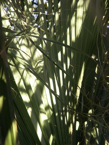 Late Afternoon Palm