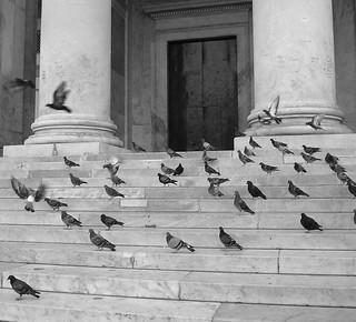 Piccioni a Piazza del Plebiscito