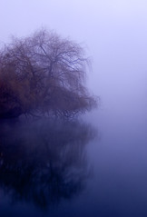 blue mistree (Peretry) Tags: tree water fog d50 river portland nikon nikond50
