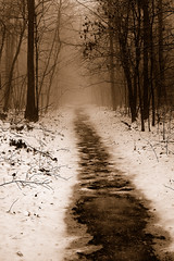 Winter Path.