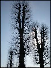 Sunblocked (Kirsten M Lentoft) Tags: park winter sky sun tree castle denmark frame naturescenes hillerød hilleroed frederiksborgcastle momse2600 kirstenmlentoft
