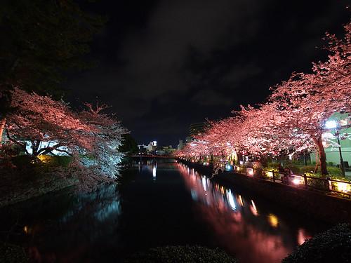 小田原城夜桜 2