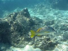 IMG_2906 (HeatherBradleyPhotography) Tags: hawaii oahu snorkeling hanaumabay hanauma senz senzenina