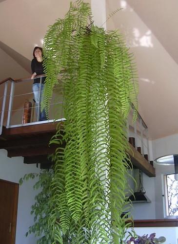 Une plante d 39 interieur qui n 39 a pas trop besoin de lumi re - Plante pour salle de bain sombre ...