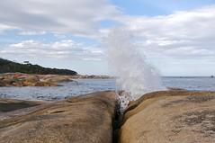 Bicheno Blowhole (Sean and Jeanine) Tags: australia blowhole tasmania bicheno