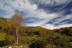 Fuentes del Narcea (elosoenpersona) Tags: autumn forest asturias bosque otoo hermo fuentes cordillera cangas narcea cantabrica hayedo beechforest cantbrica cangasdenarcea elosoenpersona