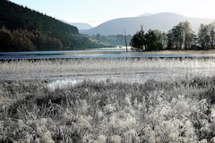 Frosty Loch Pityoulish. (artanglerPD) Tags: cairngorms pityoulish loch trees frozen water blue sky reflections frosty grasses